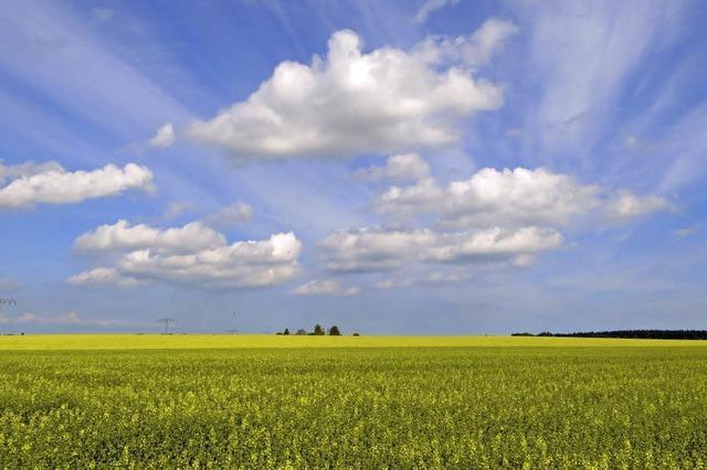 Genossenschaftsbanken verzichten auf Geschäfte mit Agrar-Rohstoffen