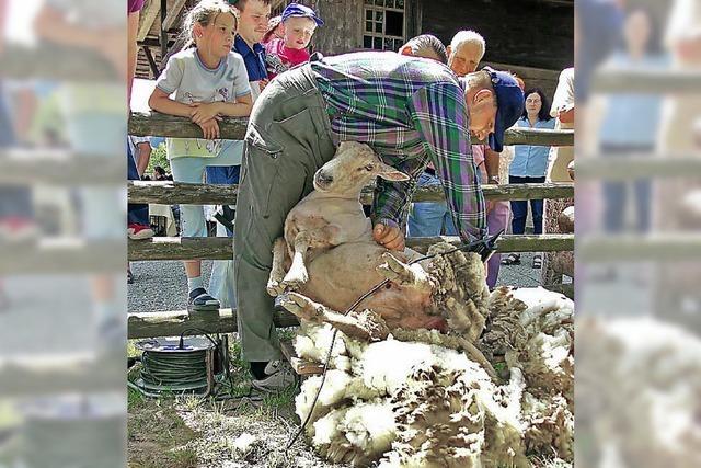 Schäferaktionstag in Gutach