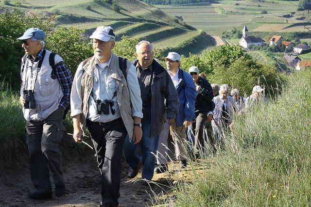 Wandern und Genießen am Kaiserstuhl