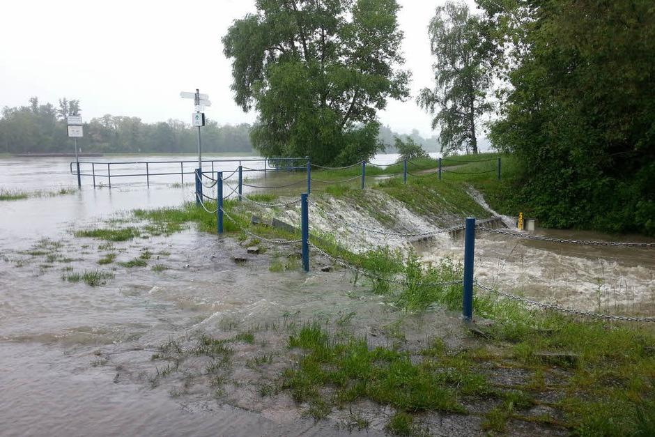 Hochwasser bei Jechtingen (Foto: Renate Dannecker)