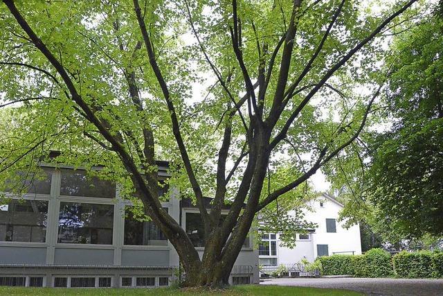 Hery-Gruppe plant lockere Wohnbebauung in grüner Oase