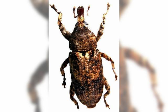 Totes Holz und lebendige Käfer