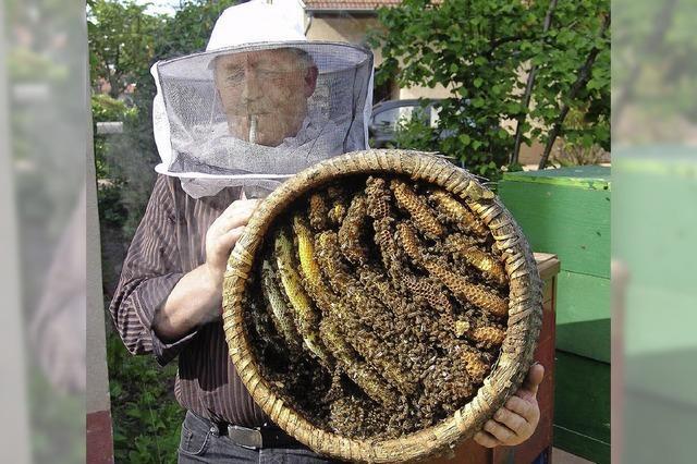 Nur keine Angst vor Bienen
