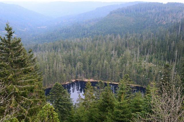 Bonde macht Vorschlag für Nationalpark Schwarzwald