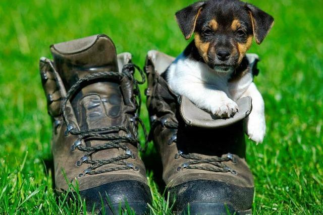 Urlaubshilfe des Lahrer Tierschutzvereins