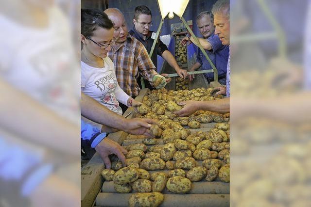 Kartoffelbauern sind optimistisch