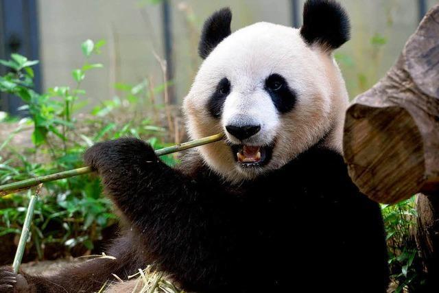 WWF kämpft seit 50 Jahren für den Naturschutz