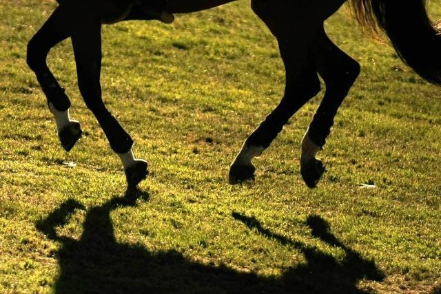Pferdeschändung bei Emmendingen – geht die Serie weiter?