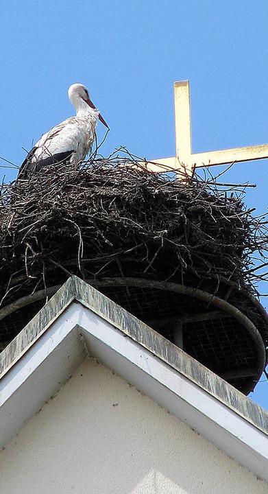 Das Storchennest auf dem Stegener Kirc...ier haben die Jungen nicht überlebt.    | Foto: Rombach