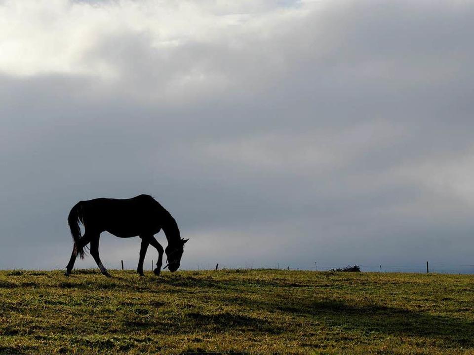 Wehrlos: Pferd auf der Wiese  | Foto: dapd