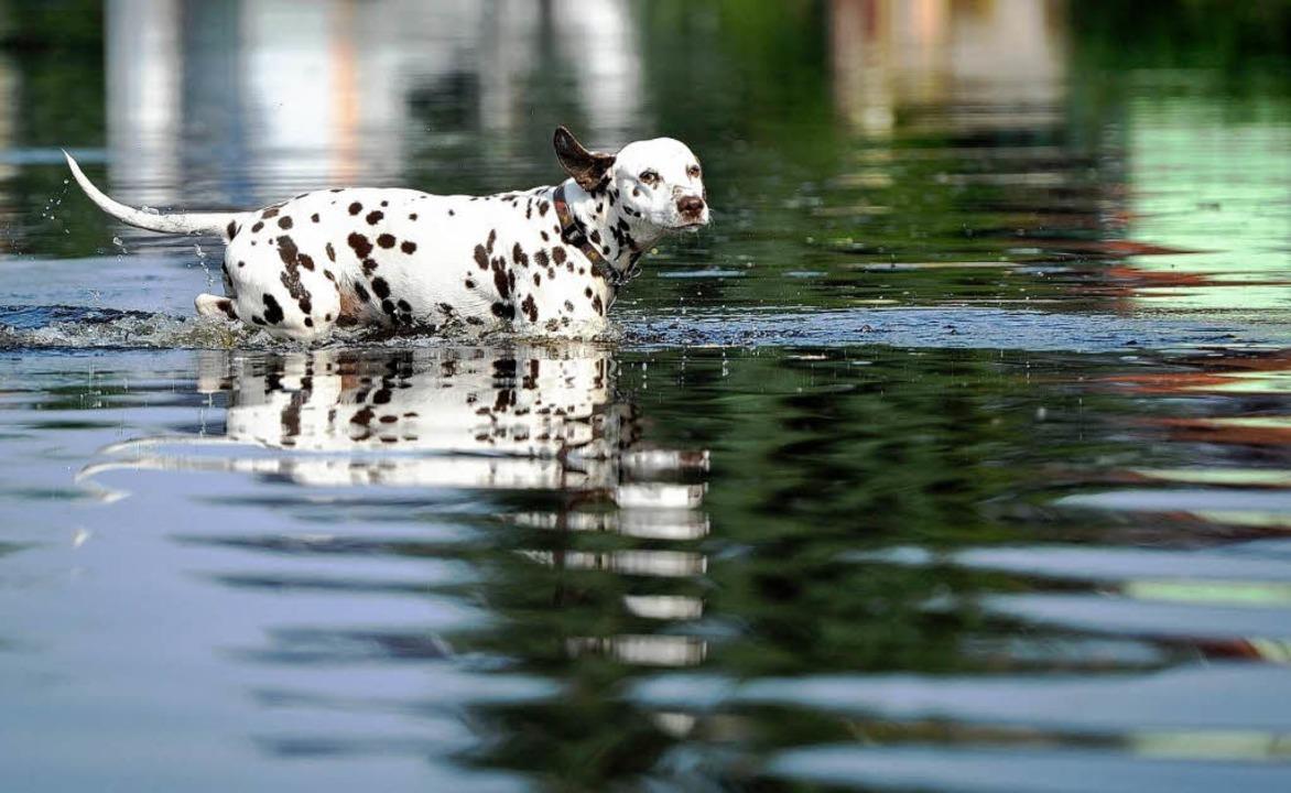 Hochwasser in Wust  | Foto: dpa