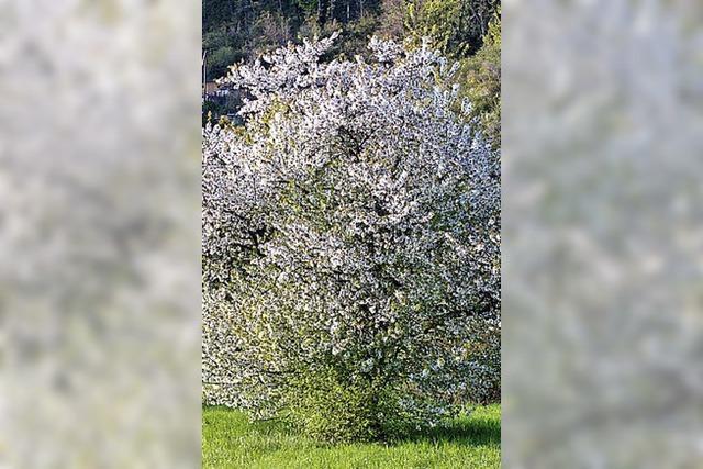 Obstbäume statt Fichten