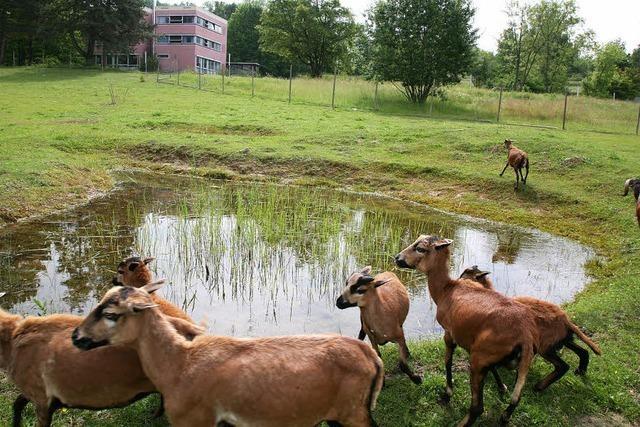 Naturschutz-AG der Heimschule bekommt UN-Siegel