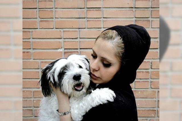 Iran macht gegen Hunde mobil