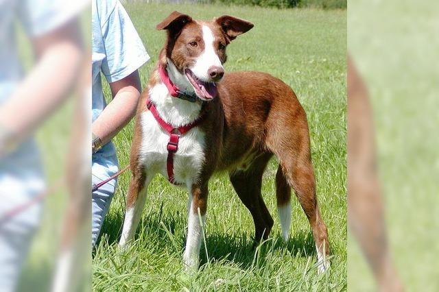 Wildernder Hund ist 2012 in Ulm ausgerissen