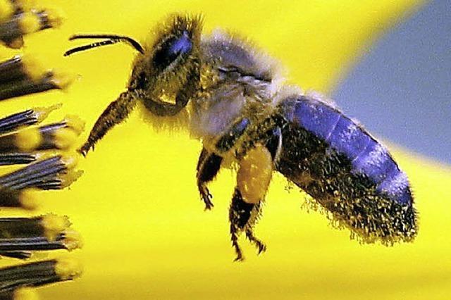 Insekten stechen Volleyballer aus