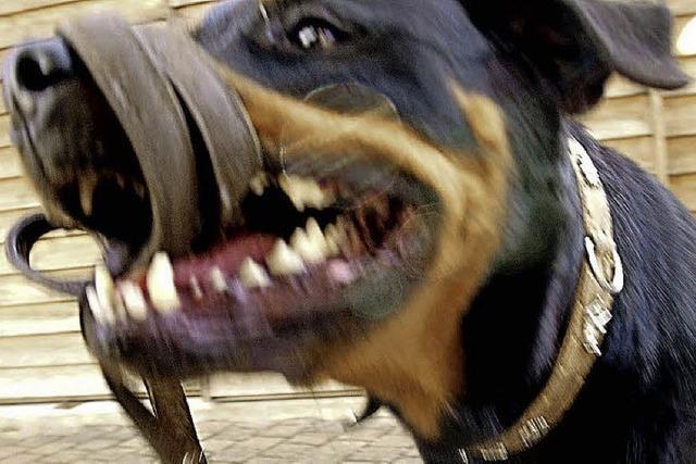 Hund fällt Hund an