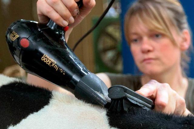 Fell in Form föhnen: Das perfekte Styling für die Kuh