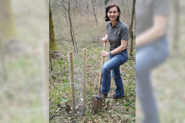 Jäger stehen Pate für Wildapfelbäume