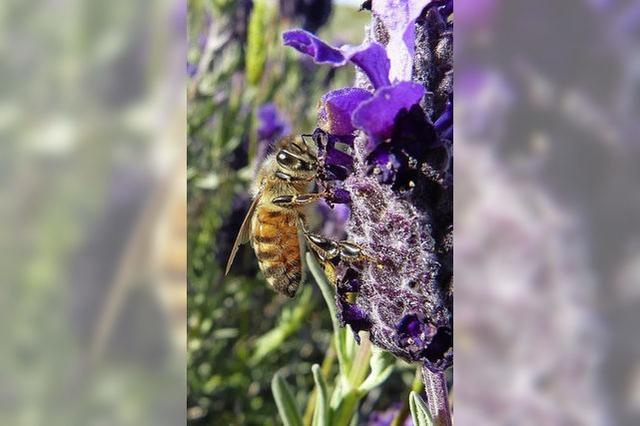 Am Sonntag dreht sich alles um Bienen