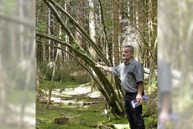 Urnen ruhen zwischen Baumwurzeln