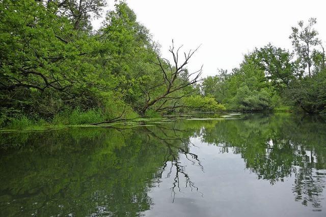 Ufer der Blinden Elz in Topzustand