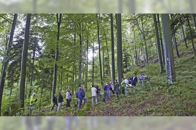 Auch Totholzflächen werden auf dem Ökokonto gutgeschrieben