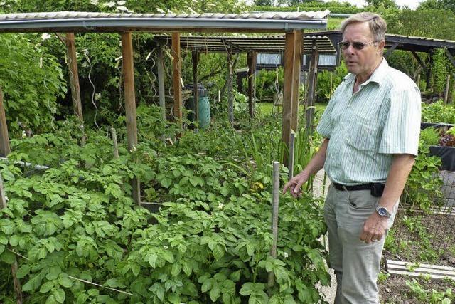 Die kleine, heile Welt zwischen Zucchini und Tomaten