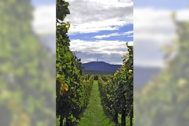 Die Anbaufläche für Wein soll behutsam wachsen