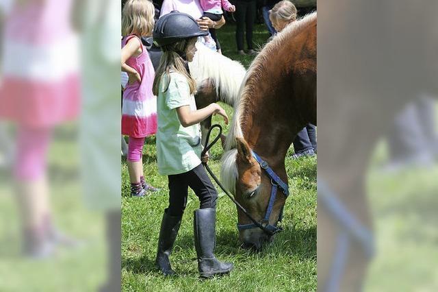 Grüttpark als Bühne für Pferde