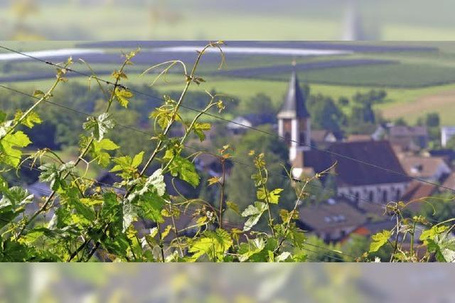 Zweckverband Breisgau Süd Touristik zieht positive Bilanz für 2012