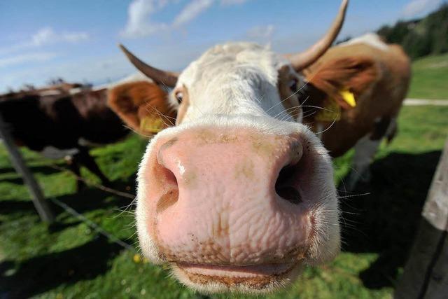 Fragen zum Bauernhof