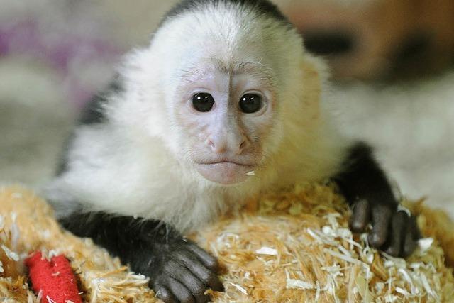 Aufregung im Affenhaus