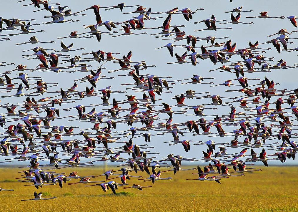 Ein Vogelparadies: der Doñana-Nationalpark in der Nähe von Jerez  | Foto: dpa
