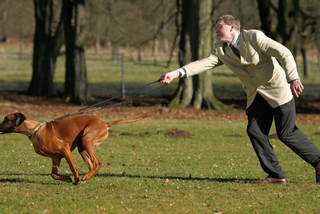 Hundeführerschein: Niedersachsen stößt Debatte an