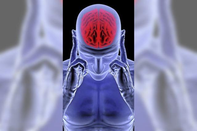 Neurobiologen entdecken Schalter für Langzeitgedächtnis