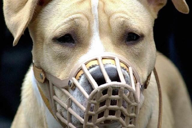 Das Halten gefährlicher Hunde ist geregelt