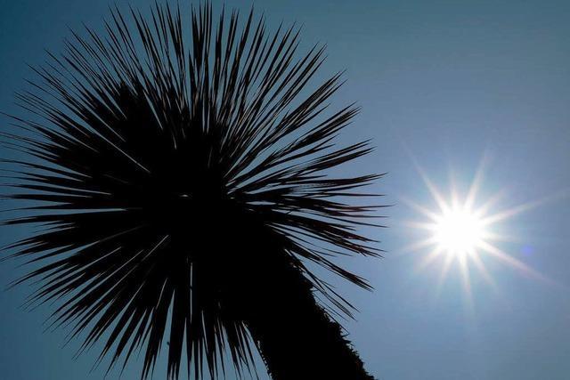 Der Juli startet durch: Schönes Sommerwetter ohne Ende