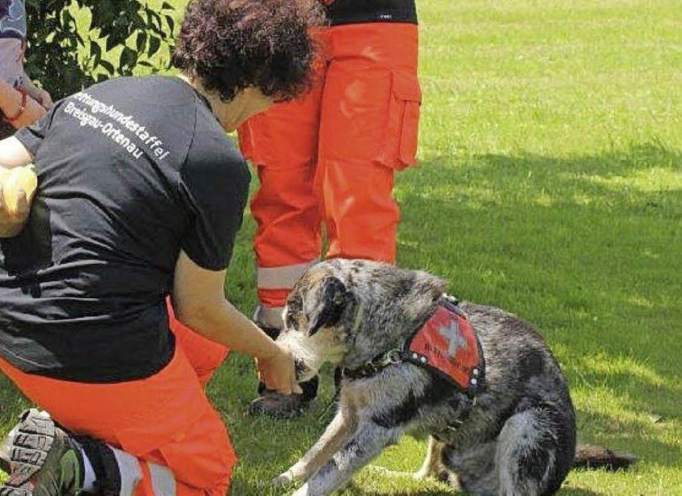 Auch Rettungshunde waren beim Aktionstag mit dabei.     Foto: Janzer