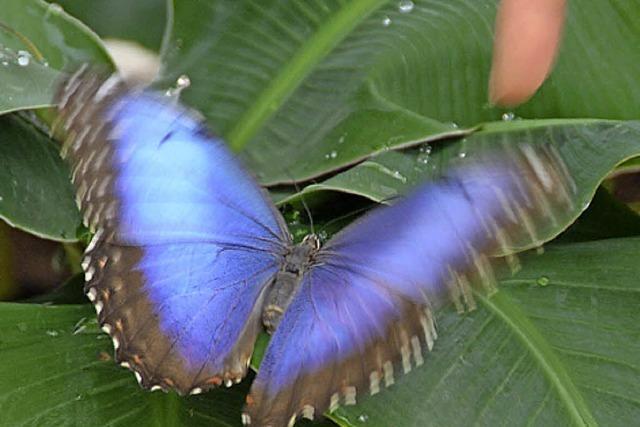 Schmetterlinge im Haus