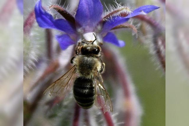 Bienen auf der Intensivstation