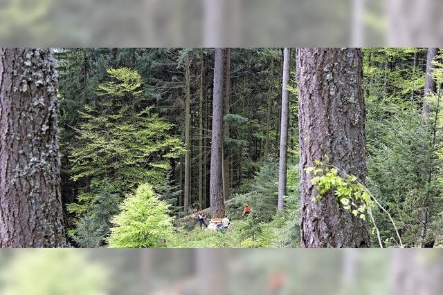 Größte Baumliege der Welt