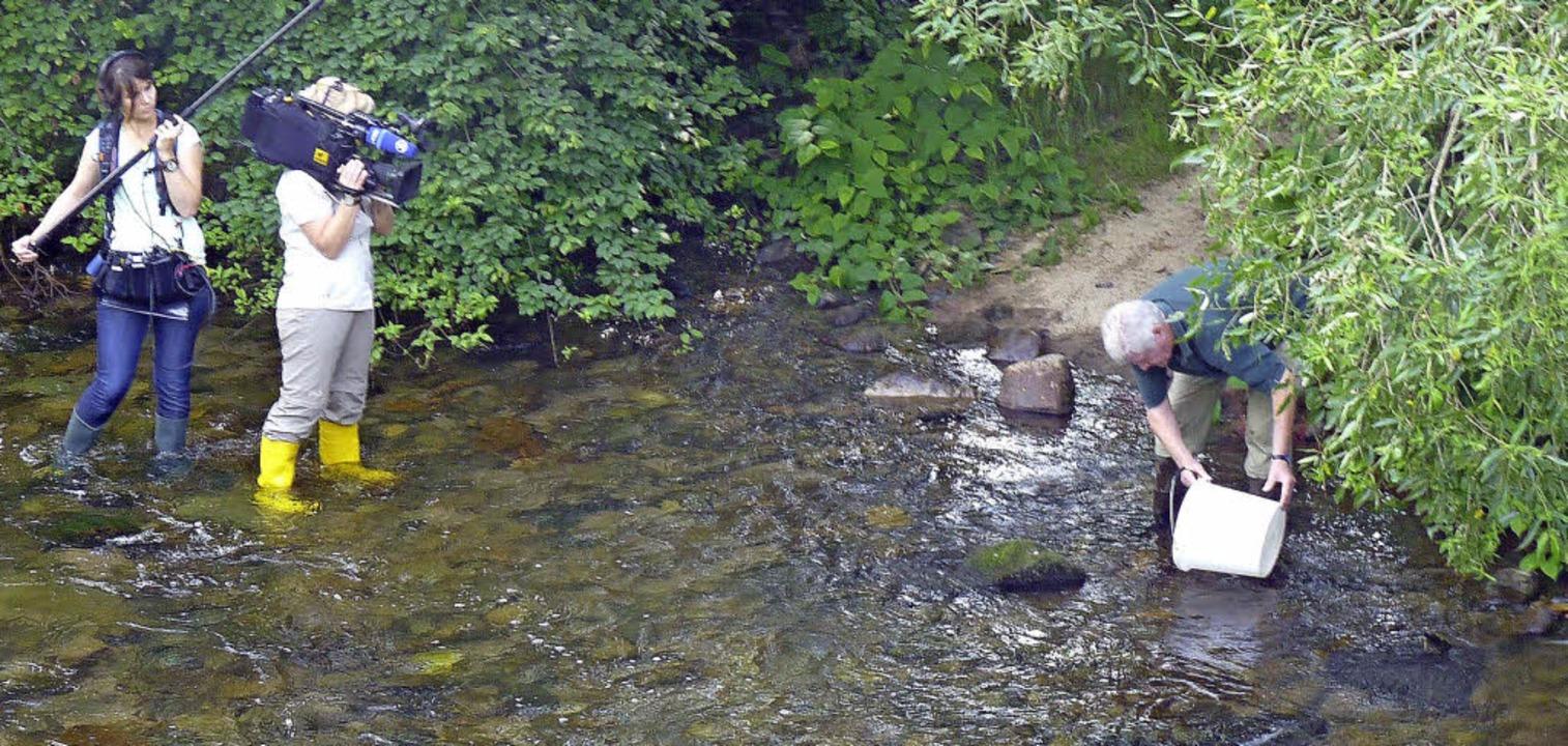 Der Anglerverein Zell hat wieder ungez...in Freiatzenbach herangewachsen sind.   | Foto: Privat