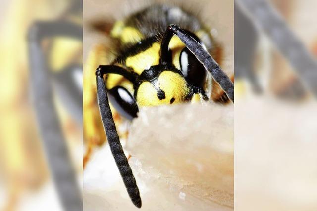 AUCH DAS NOCH: Wer Wespen hat, kann was erleben