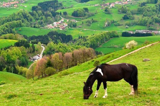 Keine heiße Spur nach Pferdeschändung in Fahrnau