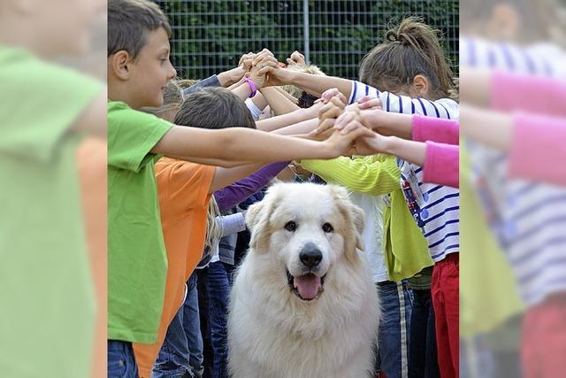 Lindenschule ist auf den Hund gekommen