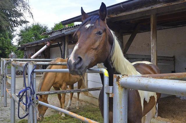 Pferdebesitzer sind alarmiert
