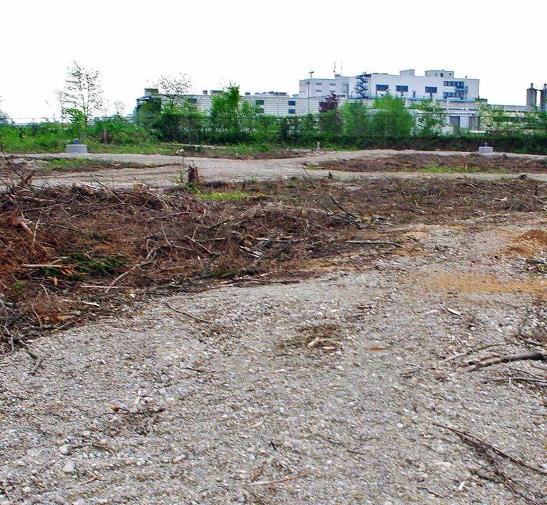 Die im vergangen Jahr geführten Unters...wischen auch zum Teil abgerissen sind.    Foto: Rolf Reißmann