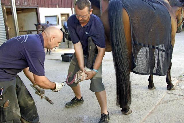 Pferde bekommen Gesellschaft
