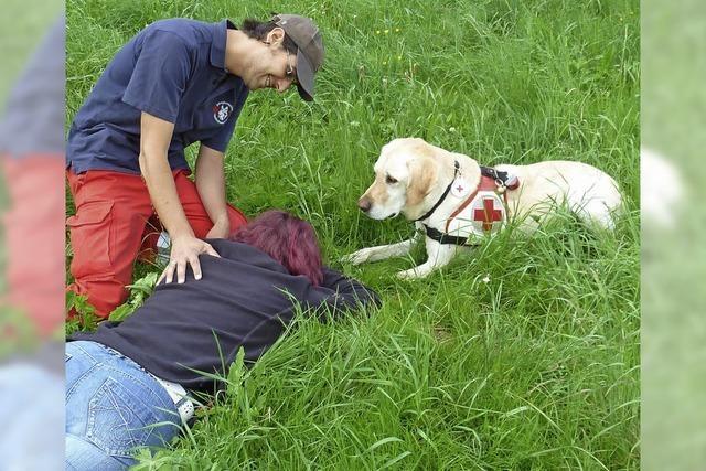 Rettungsstaffel sucht Suchhunde